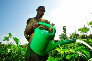 AgriPro Wants to Revolutionize Africa's Agricultural Industry