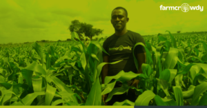 The Best Way to Start an Agric Business and Make Money Right Now