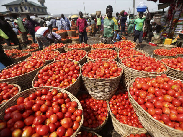 Nigerian agric company Tomato Jos raises €3.9 million for irrigation and processing plant